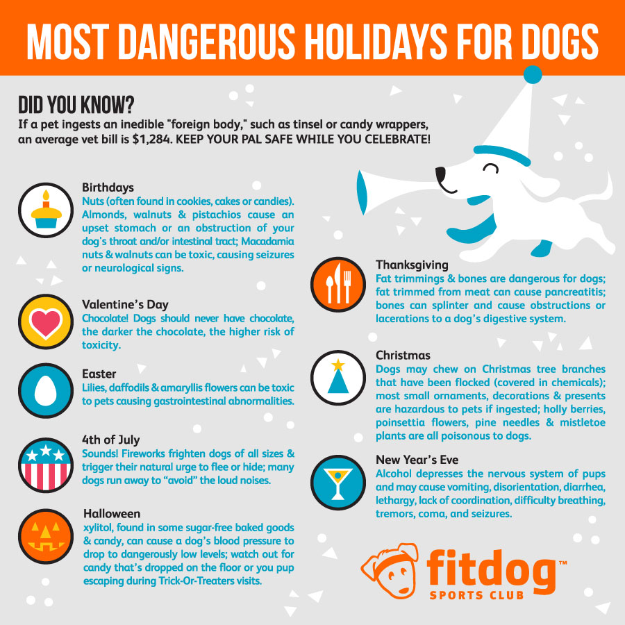 Dangerous Holidays for Dogs