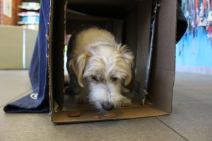 boxes into dog games